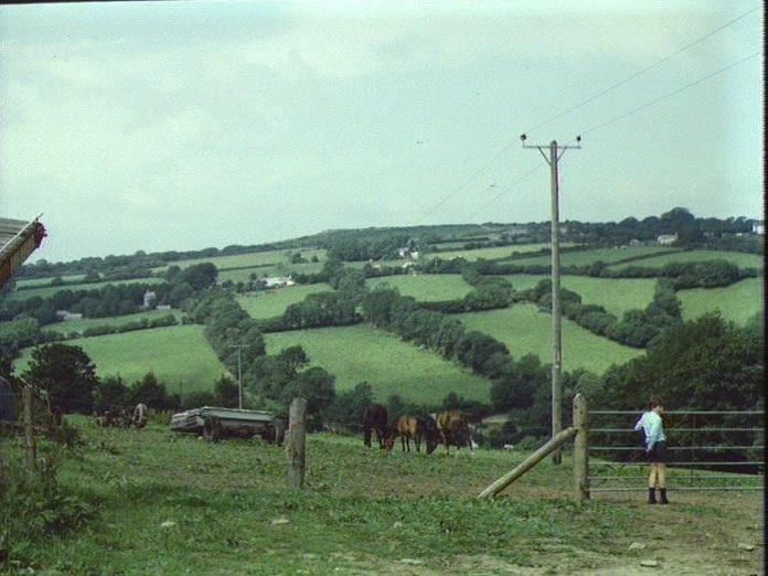 Ponies grazing near Blisland.-1986