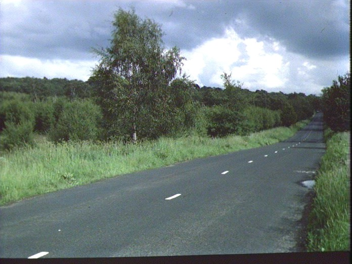 A View of Cannock Chase.-1986
