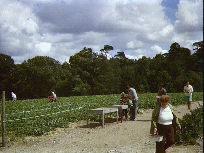 Pick Your Own/ Haywood Farm.-1986