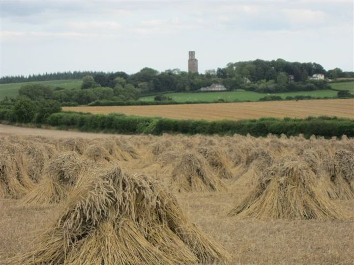 Stooks at North Farm, Horton 2011-2011