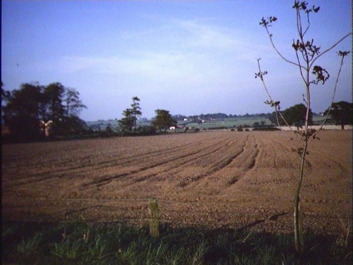 FARMLAND NEAR COLTON (RUGELEY)-1986