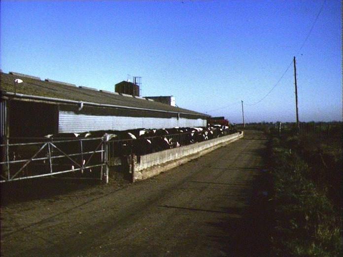 Dairy Herd - chalder Farm-1986
