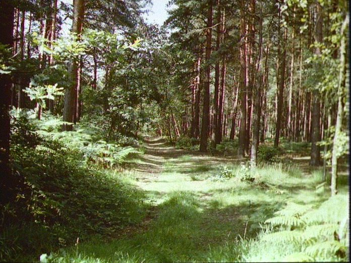 Typical Woodland, Woking.-1986