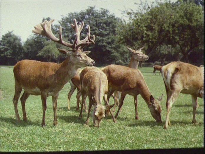 Hamm Court Farm-1986
