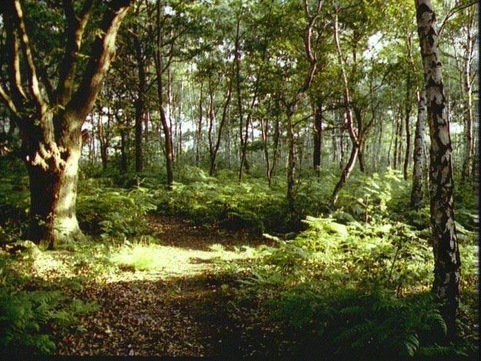Joydens Wood-1986
