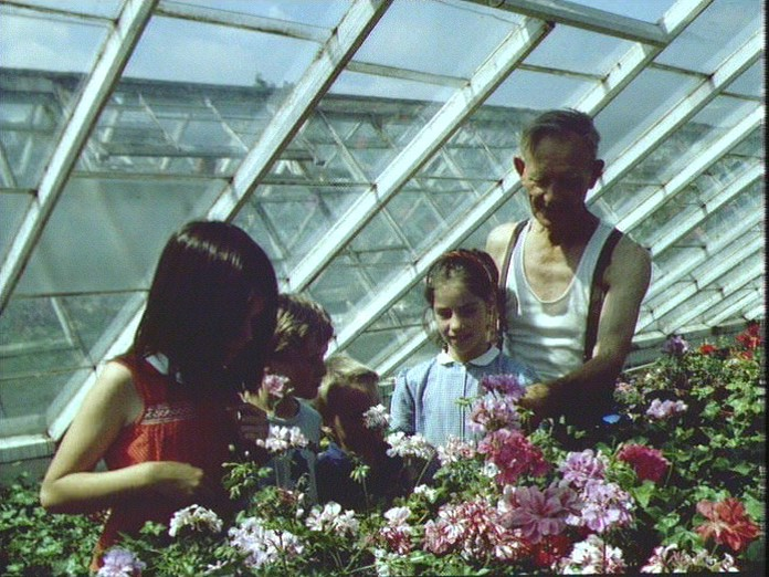 Greenhouse Beechenlea Nursery-1986