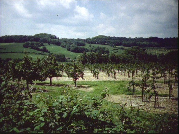 An orchard in Grafty Green.-1986