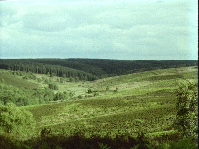 Cannock Chase-Sherbrook Valley