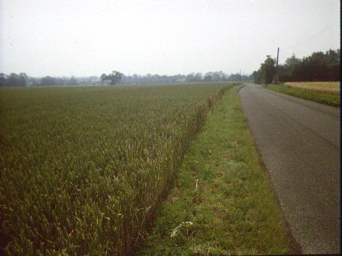 TOWARDS DAMERONS FARM